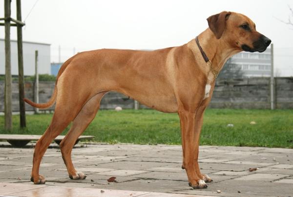 Zurimahali's Fiona